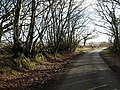 Lane on Tregeare Down - geograph.org.uk - 718975.jpg