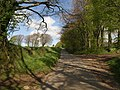 Lane to Pepperdon Down (2) - geograph.org.uk - 1290953.jpg