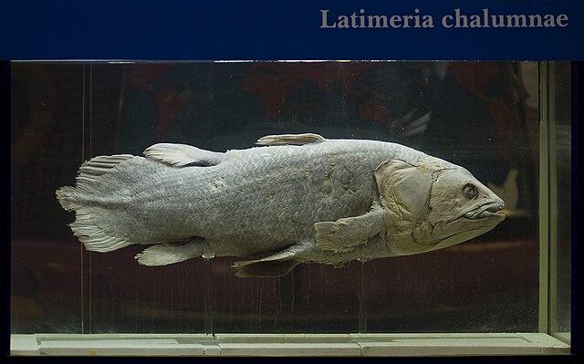 Latiméria