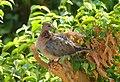 Les oiseaux d'Egypte - panoramio.jpg