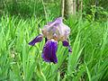 Leutratal-Iris-X-1310.jpg