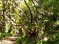 Levada 25 Fontes, Madeira, Portugal, June-July 2011 - panoramio (3).jpg