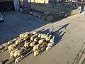 Levando as ovelhas de volta para a corte em Guitiriz (1).jpg
