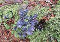Lichen to ID - Flickr - brewbooks.jpg