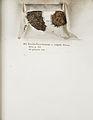 Lichenes Helvetici IX X 1833 003.jpg