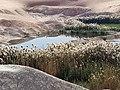 Little paradise lake in desert.jpg
