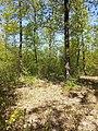 Locatelliwald westlich des Buchbergs sl6.jpg