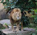 Loewe Tierpark Hellabrunn-3.jpg
