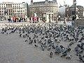 London, Trafalgar square, pigeons - geograph.org.uk - 1130889.jpg