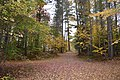 Long Lake, NY 12847, USA - panoramio.jpg