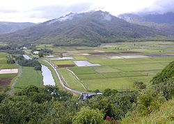 Lower Hanalei Valley.jpg
