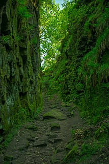 Luds Church deep chasm on the hillside above Gradbach, Staffordshire, England