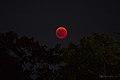 Luna rossa 02 (42978810004).jpg