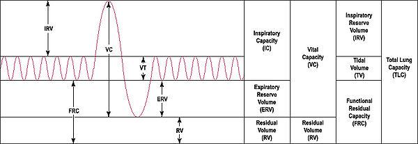 Spirometry+Graph Spirometry - Wikipedia, the free encyclopedia