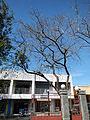 Mabini,Batangasjf8724 03.JPG