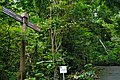 MacRitchie Nature Trail, Singapore; December 2014 (06).jpg