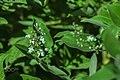 Macro Nature Flower Shots (211357661).jpeg