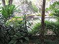 Madeira em Abril de 2011 IMG 1715 (5663743160).jpg