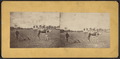 Man plowing field with camel, from Robert N. Dennis collection of stereoscopic views.png