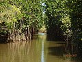 Mangroves canopy.jpg