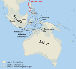 Wallace Line - Wallace's Line delineates Australian and Southeast Asian fauna. The probable extent of land at the time of the last glacial maximum, when the sea level was more than 110 m lower than today, is shown in grey. The deep water of the Lombok Strait between Bali and Lombok formed a water barrier even when lower sea levels linked the now-separated islands and landmasses on either side.