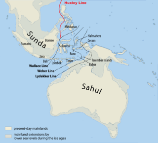 Wallace Line faunal boundary line separating the ecozones of Asia and Wallacea, a transitional zone between Asia and Australia