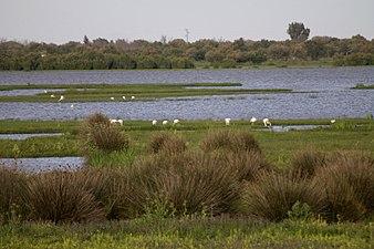 Marismas de Doñana.jpg