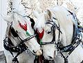 Mary Endico's visiting Santa's horses.jpg