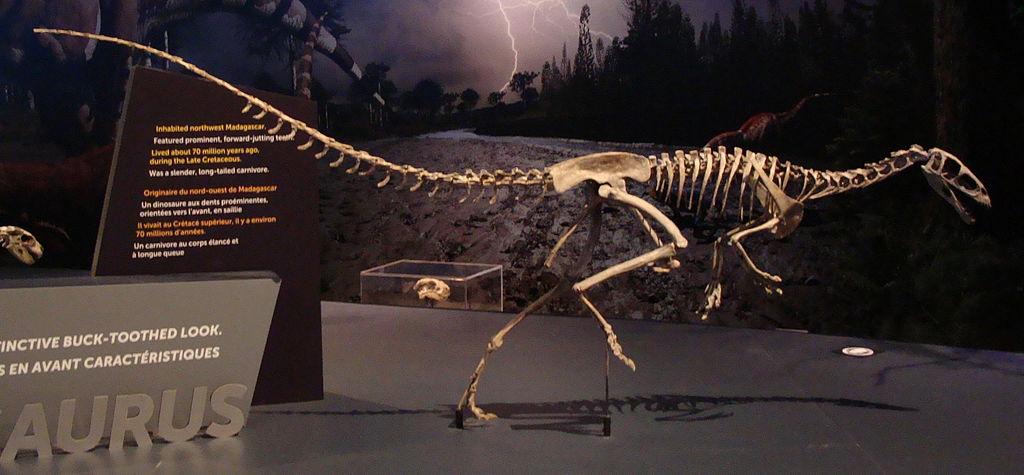 Masiakasaurus.JPG