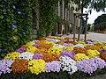 Massif de fleurs au palais st georges a rennes - panoramio.jpg