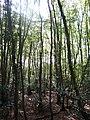 Mercers Wood - geograph.org.uk - 1529935.jpg