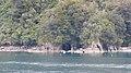 Milford Sound, South Island (483078) (9485252198).jpg