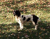 Millie (dog).jpg