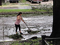 Mom Raking After Isaac.jpg