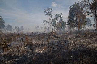 Deforestation in Cambodia
