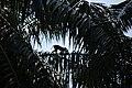 Monkey ride in Saatchori National Park, Hobigonj, Sylhet, Bangladesh.jpg