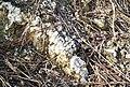 Monte Baron strato di magnesite affiorante.jpg