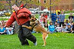 Month of Military Child MWD demonstration 150414-F-OH119-107.jpg