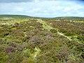 Moorland west of Pool Hill - geograph.org.uk - 1326024.jpg