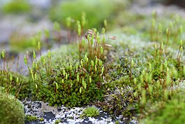 Mosses on a tombstone.jpg