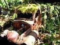 Mossy Old Car.jpg