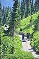 Mount Rainier - Paradise - Moraine Trail - August 2014 - 03.jpg