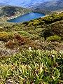 Mountain Tarn, Hartz Mountains National Park, Southern Tasmania.jpg