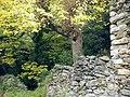Mulberry and plane trees near Anavriti - panoramio.jpg