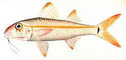 definition of mulloidichthys