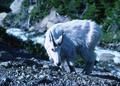 NRCSMT94001 - Montana (5053)(NRCS Photo Gallery).tif
