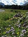 Natura alpina.jpg
