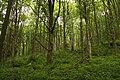 Nature reserve Žižkův vrch in summer 2012 (13).JPG