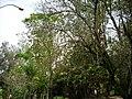 Natureza - panoramio - tiowalmes (2).jpg