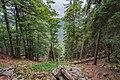 Naturschutzgebiet Feldberg (Black Forest) - Alpiner Steig am Feldberg - Bild 011.jpg